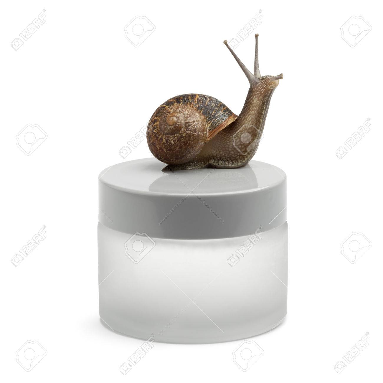 Snail-slime Face Cream With The Snail On The Pot Stock Photo ...