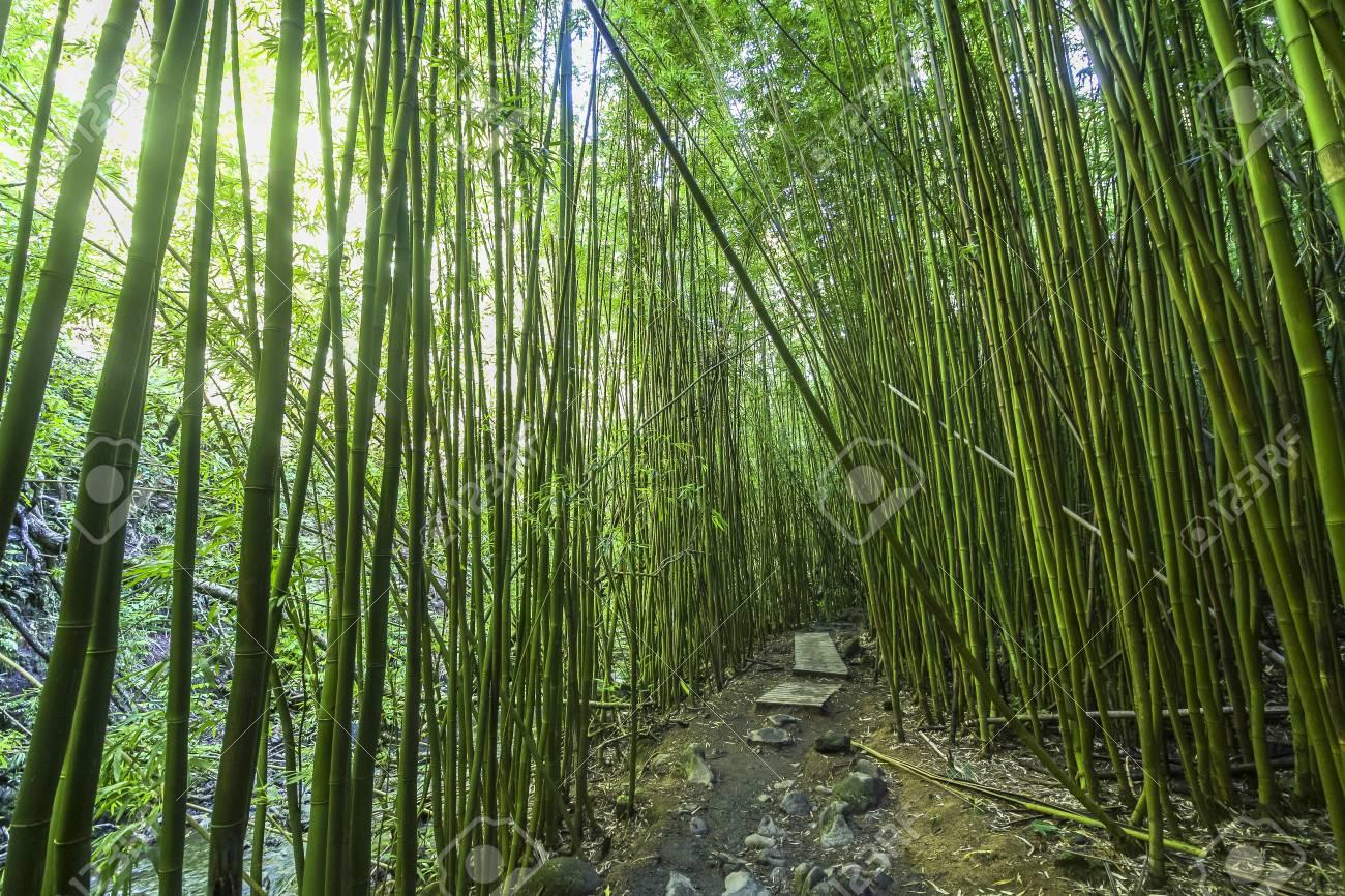 Schoner Weg Durch Uppigen Bambuswald Maui Hawaii Lizenzfreie Fotos