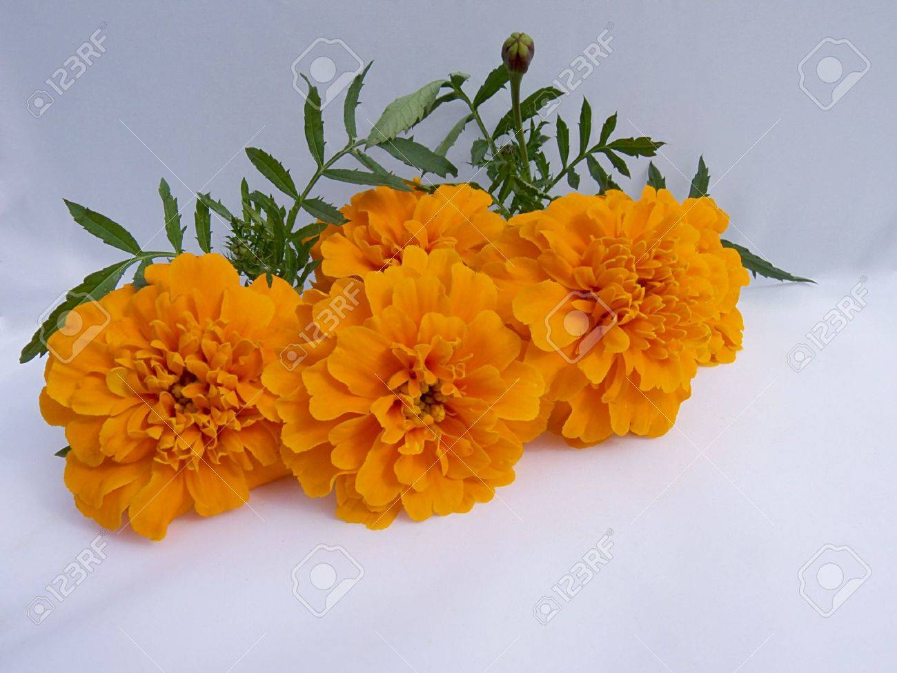 students flower Stock Photo - 10861594