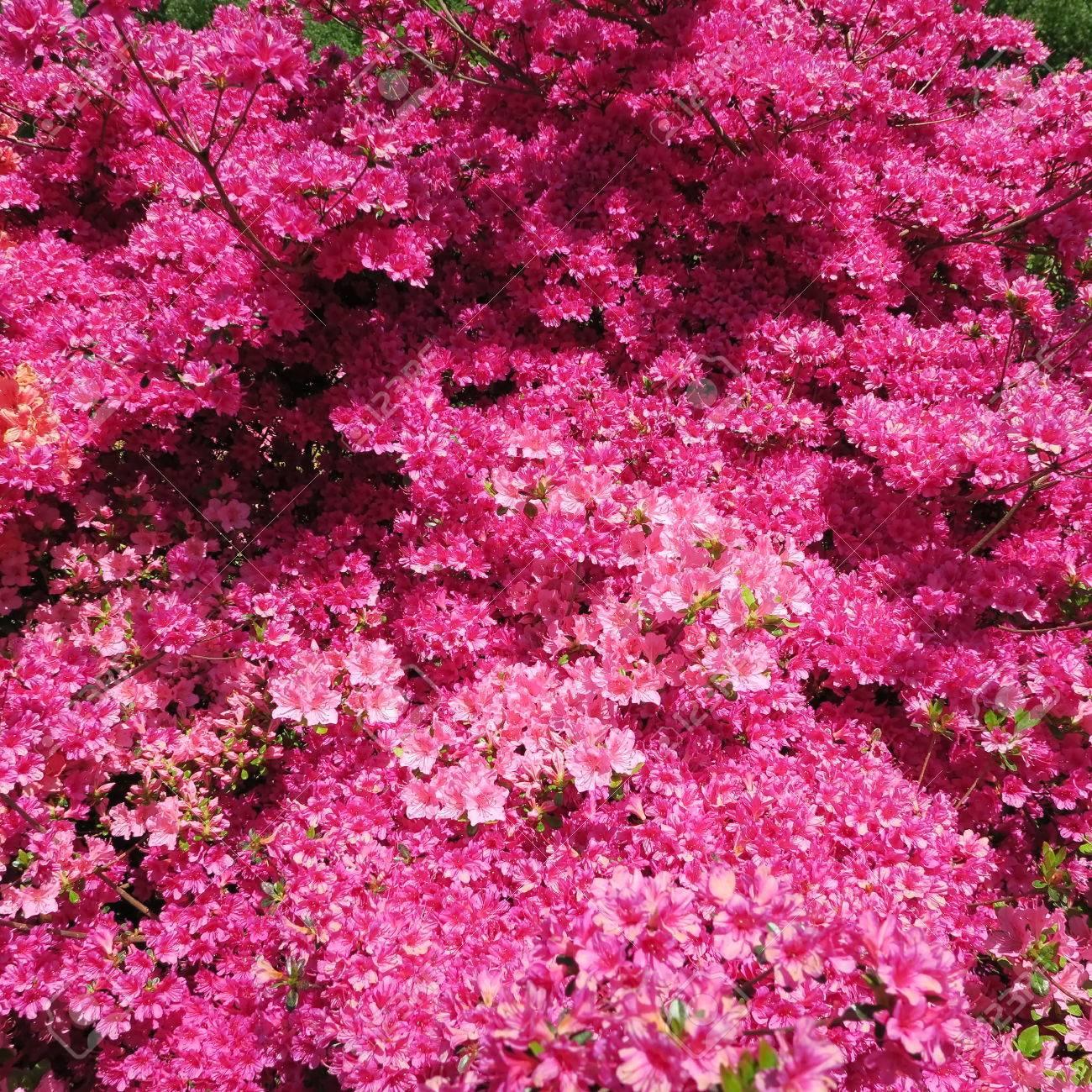 Ansprechend Blumen Mai Galerie Von Standard-bild - Viele Bunte Blühen Im Von