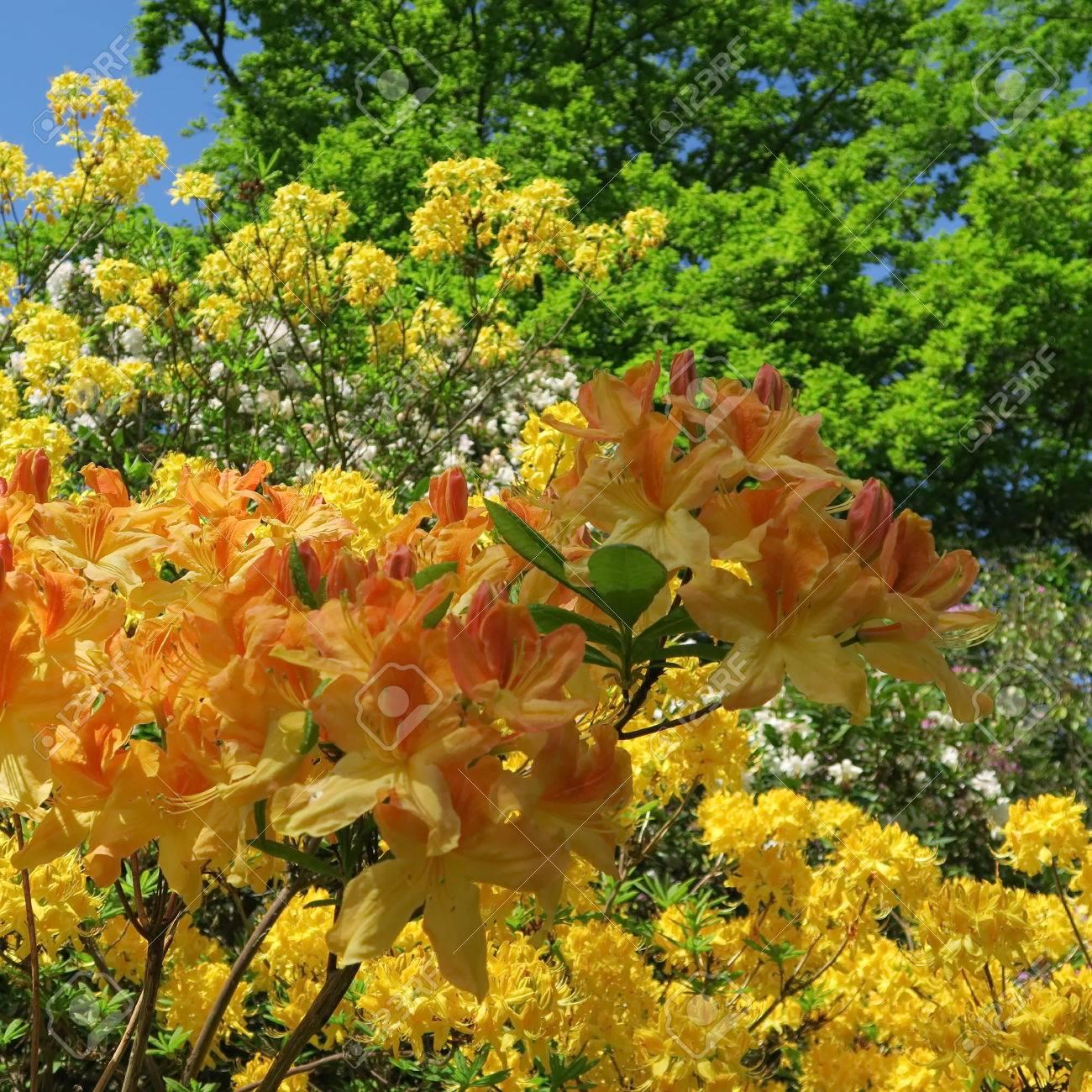 Bezaubernd Blumen Mai Ideen Von Standard-bild - Viele Bunte Blühen Im Von