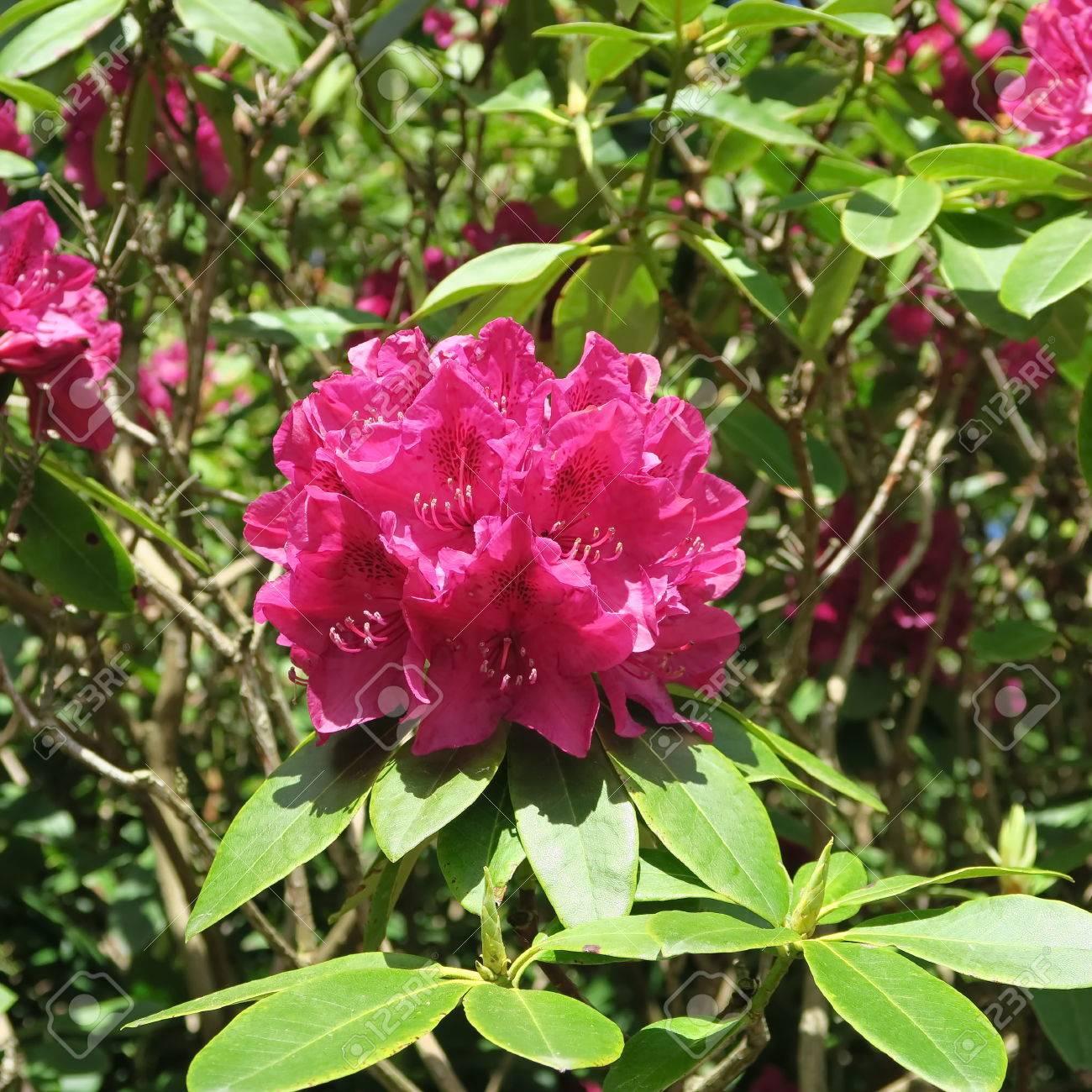Außergewöhnlich Blumen Mai Galerie Von Standard-bild - Viele Bunte Blühen Im Von