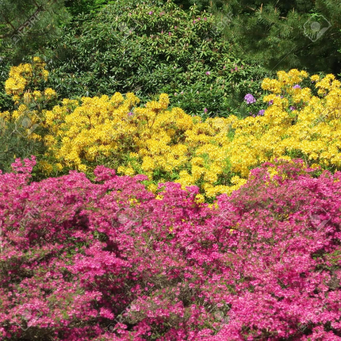 Großartig Blumen Mai Sammlung Von Standard-bild - Viele Bunte Blühen Im Von