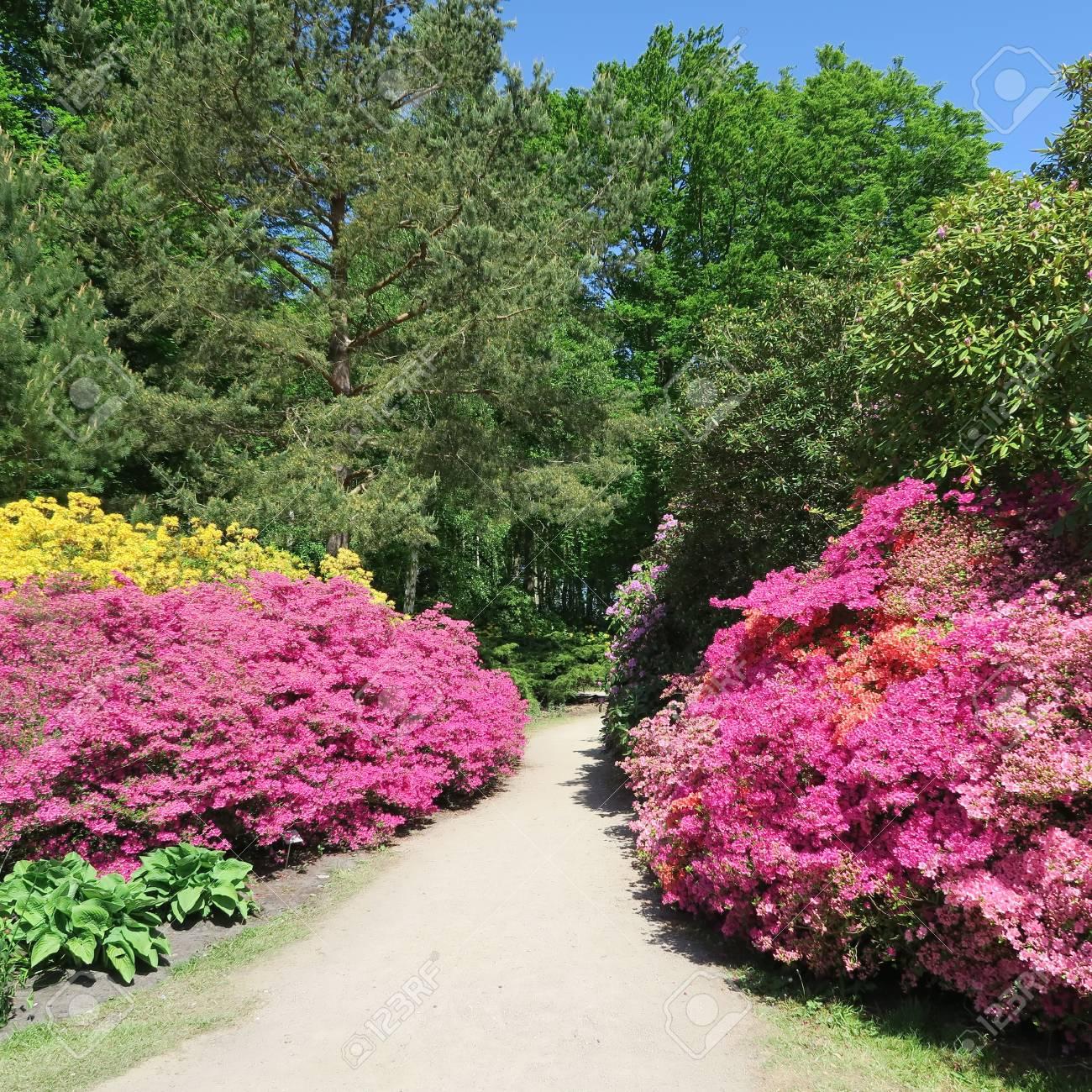 Liebenswert Blumen Mai Galerie Von Standard-bild - Viele Bunte Blühen Im Von