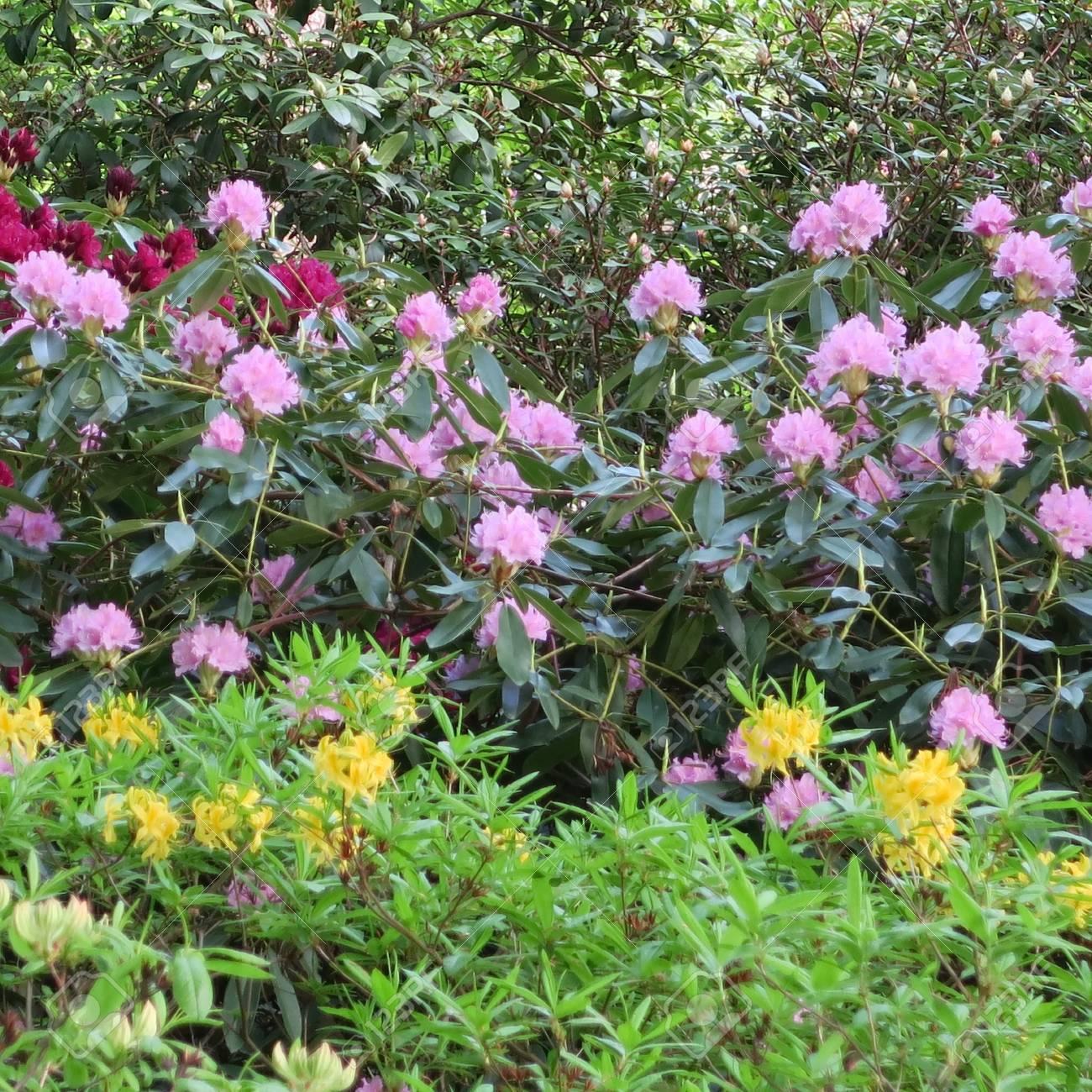 Elegant Blumen Mai Das Beste Von Standard-bild - Viele Bunte Blühen Im Von
