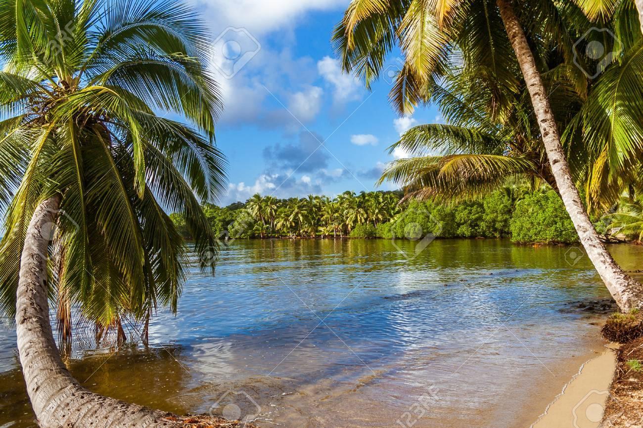 Vegetación Exuberante Con Palmeras Sumergidas En La Isla Sainte