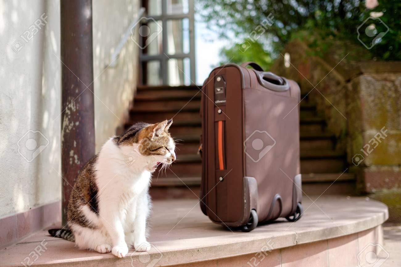 cat with suitcase Standard-Bild - 89583783