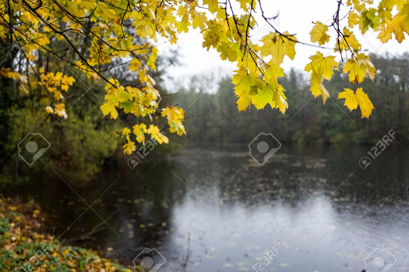 Leaves at Backhausteich in Kranichstein, Germany Standard-Bild - 89681640
