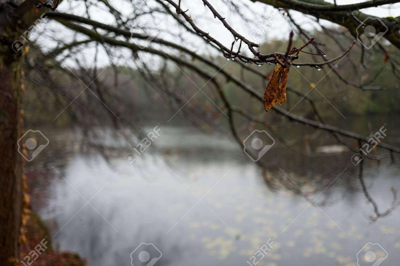 Leaves at Backhausteich in Kranichstein, Germany Standard-Bild - 89694814