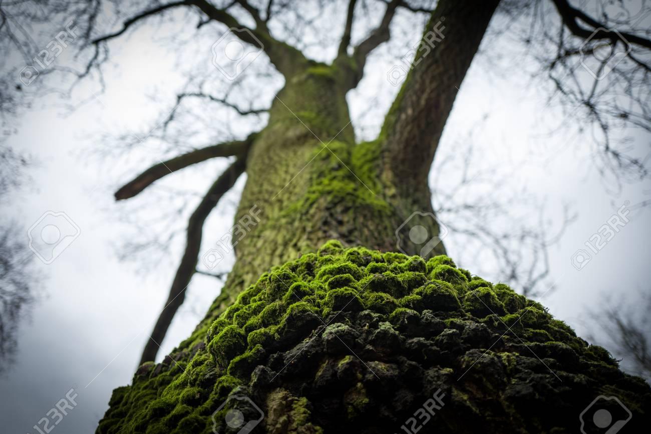 Green tree in Frankfurt Gruenburgpark Standard-Bild - 91893284