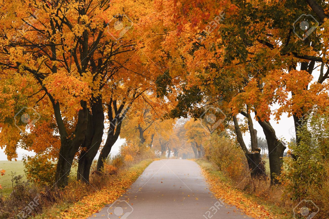 Autumn road with colorful vibrant maple trees fall in poland autumn road with colorful vibrant maple trees fall in poland stock photo 16210259 publicscrutiny Gallery