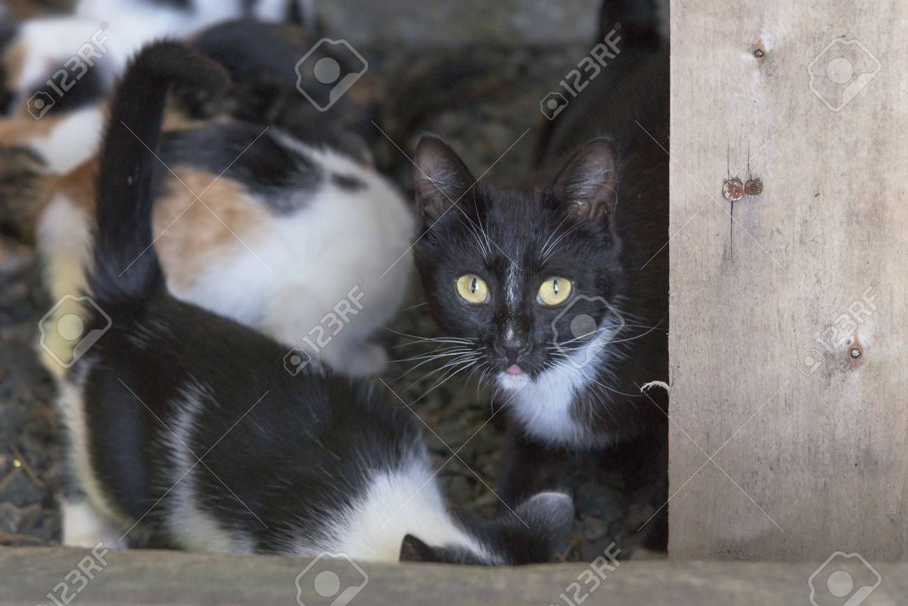 Curious Cute Black Cat With Kittens Stock Photo Picture And Royalty Free Image Image 99336082