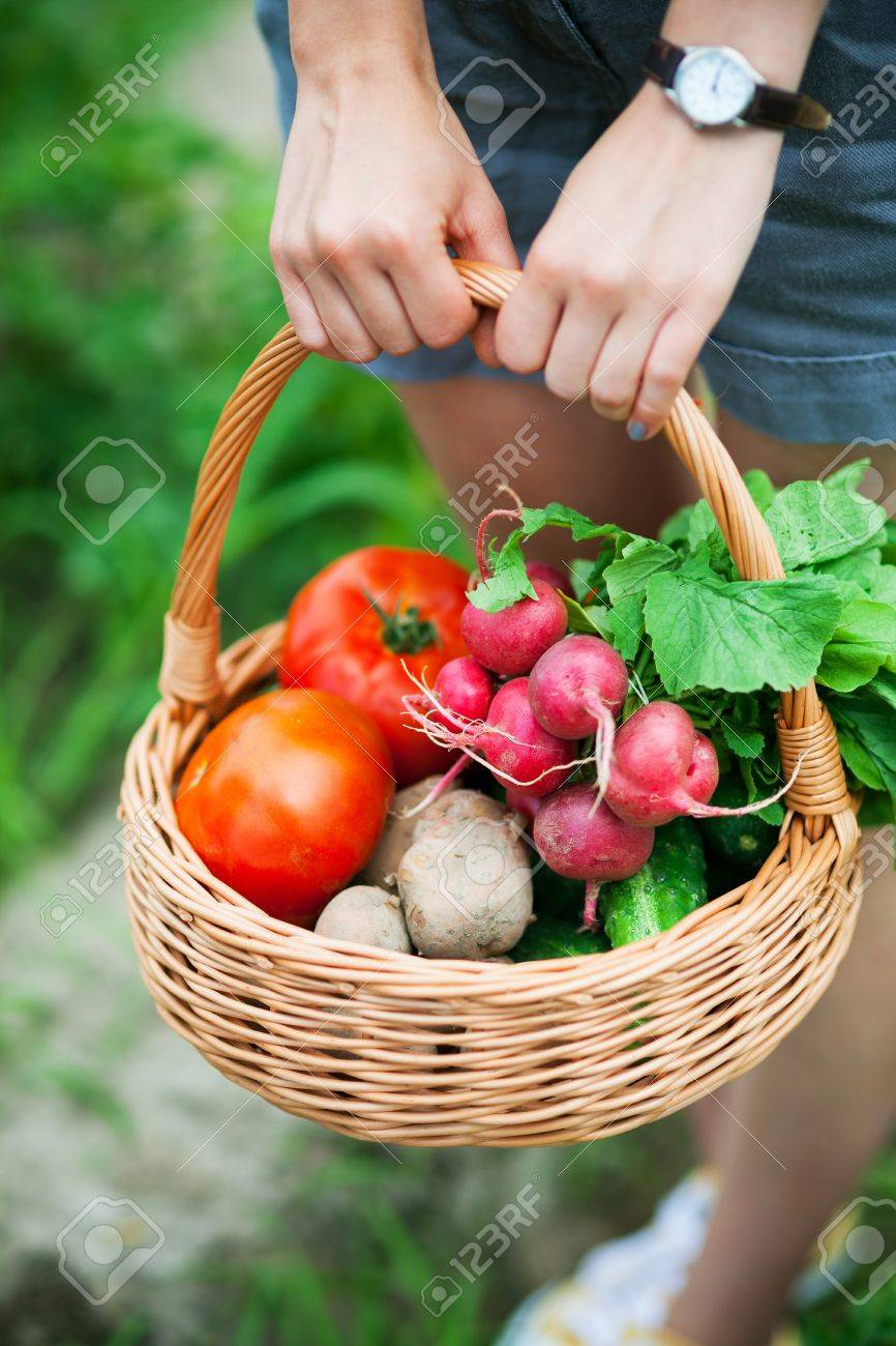 Woman with basket of vegetables Stock Photo - 14430790