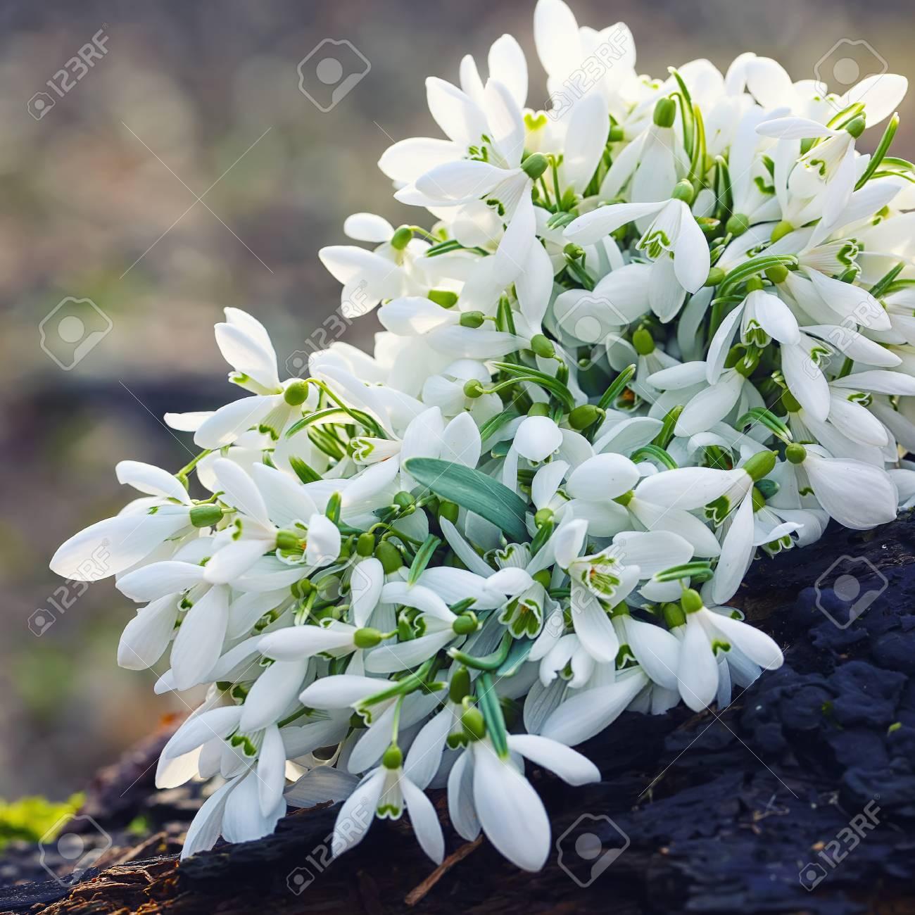 Mazzo Di Fiori Di Primavera.Immagini Stock Bouquet Di Fiori Di Primavera Di Primavera Che