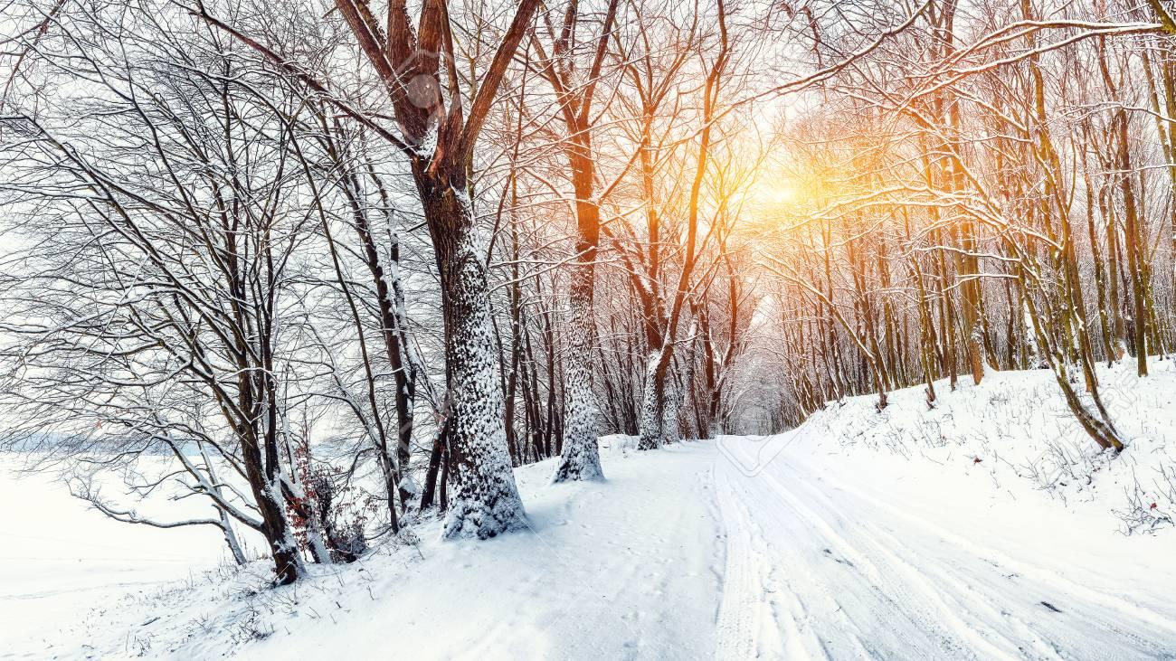 """Αποτέλεσμα εικόνας για snow in forest"""""""