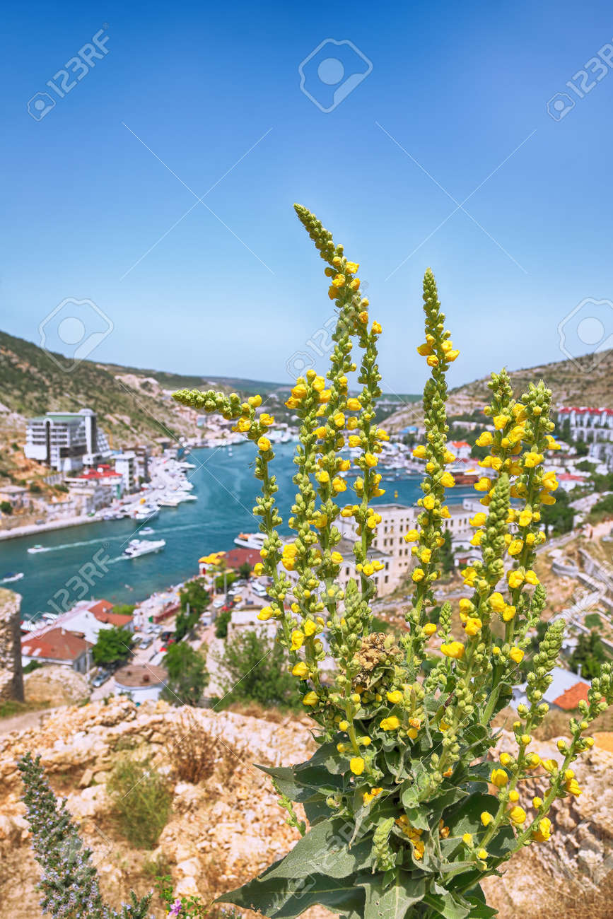 Stunning view of Balaklava bay with yachts from the Genoese fortress Chembalo in Sevastopol city. Blooming mallow at foreground. Crimea - 170378849