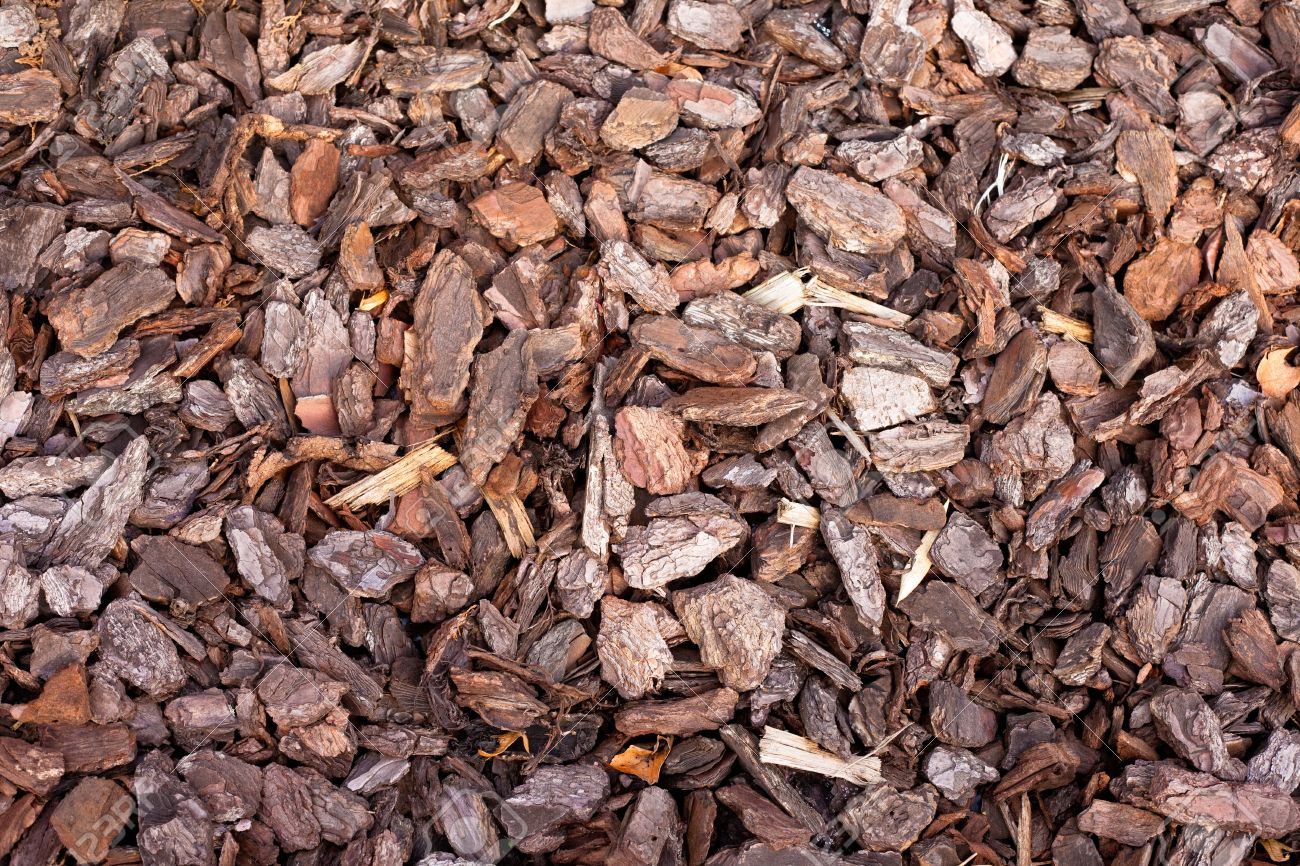 Pine Bark Mulch Background Texture Pattern In Outdoor Garden