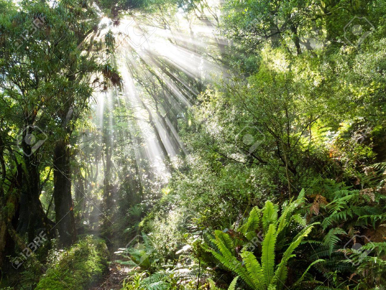 Sun beams of light penetrating dense lush green canopy of tropical rainforest jungle wilderness Stock Photo & Sun Beams Of Light Penetrating Dense Lush Green Canopy Of Tropical ...