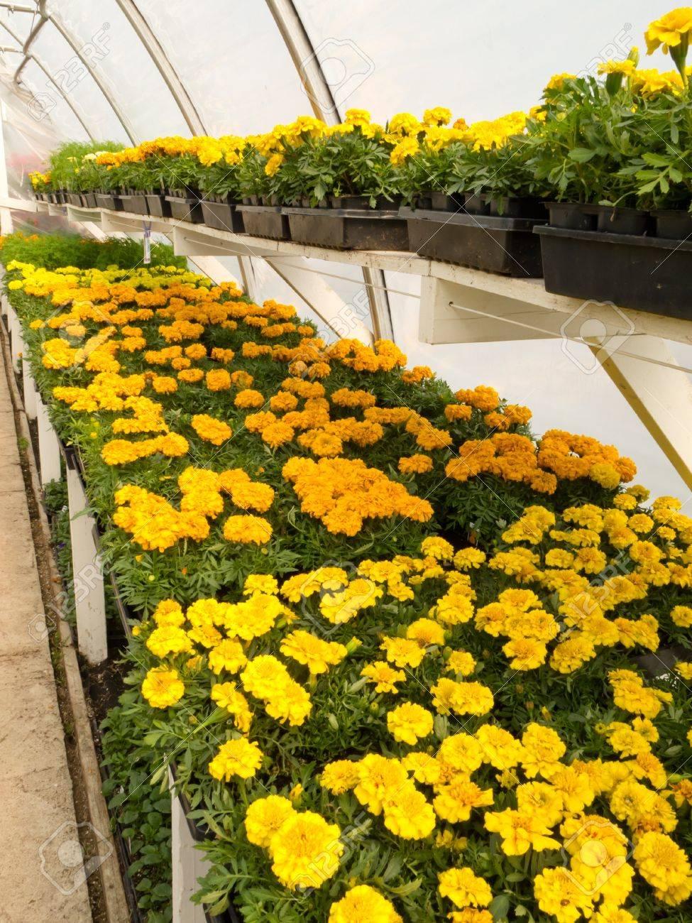 A L\'intérieur De Serre Horticulture Commerciale De Jardin Centre De ...