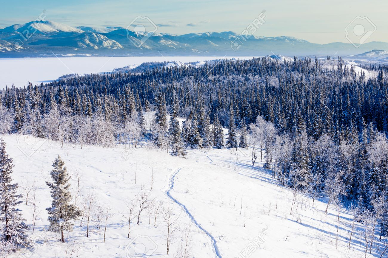 Snow-shoe Trail In Boreal Forest Taiga Winter Wilderness Landscape ...