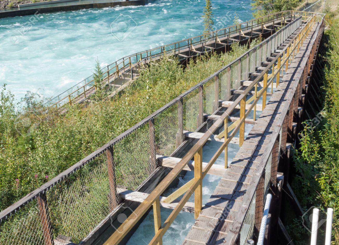Whitehorse Escalera Para Peces, Escala De Peces De Madera Más Largo ...