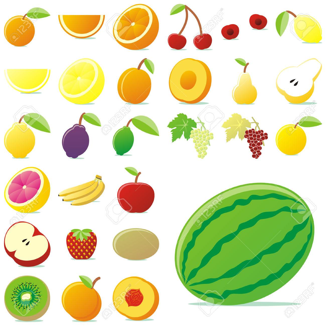 fully editable vector vector fruits with details royalty free