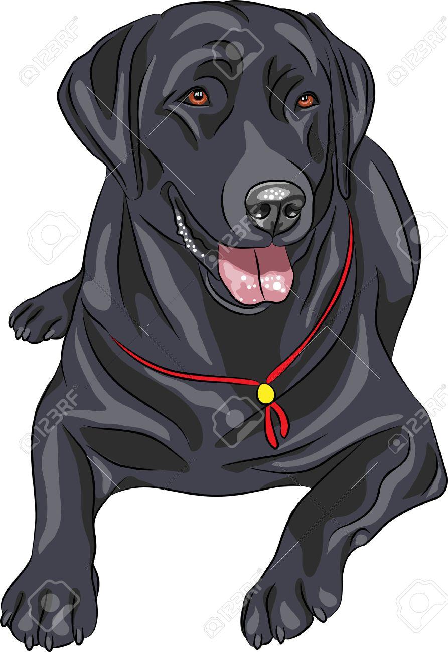 5 596 labrador retriever cliparts stock vector and royalty free