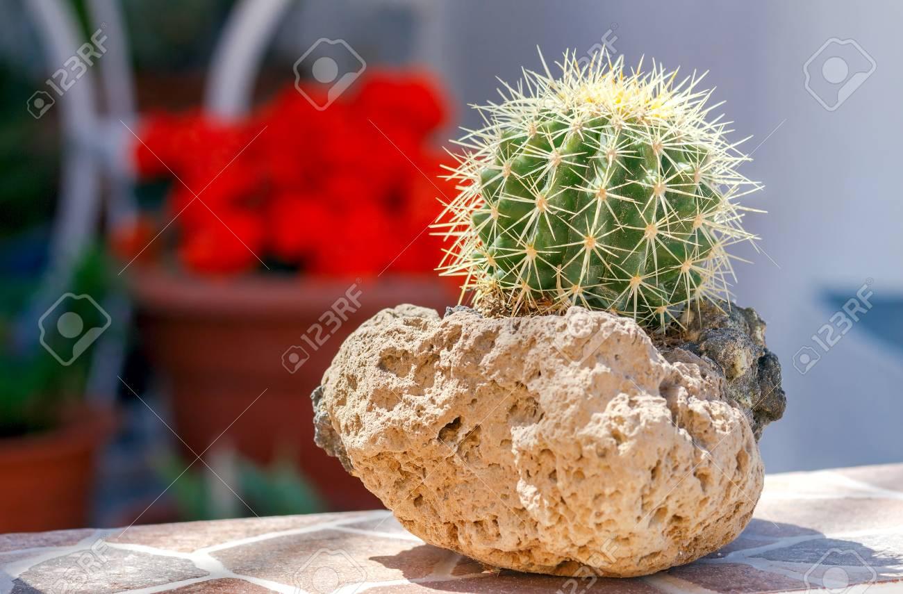 Cactus En Una Olla De Piedra Pmez Volcnica Fotos Retratos