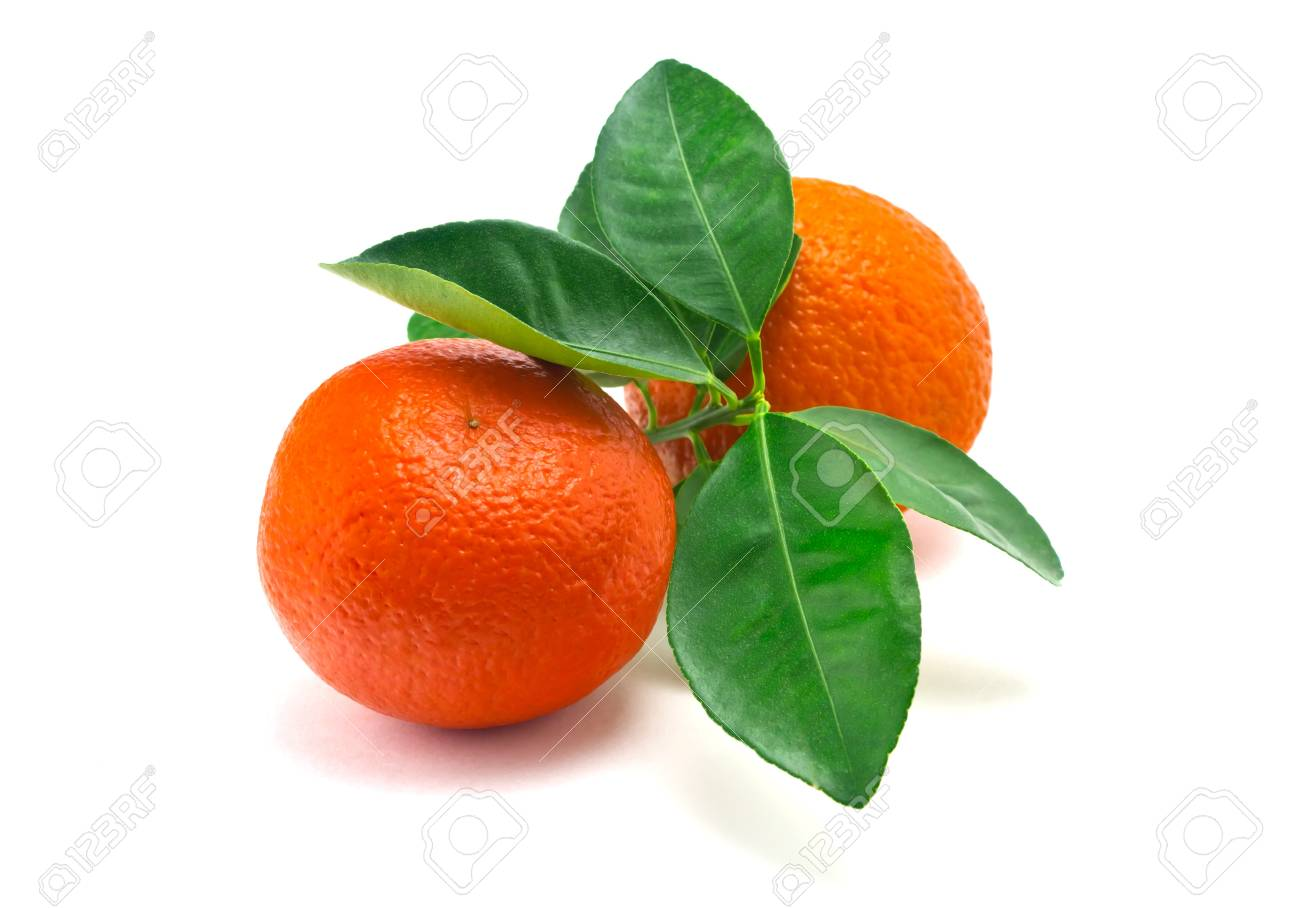 citrus fruitOranges on a white backgroundOranges with green leaves Stock Photo - 19049330