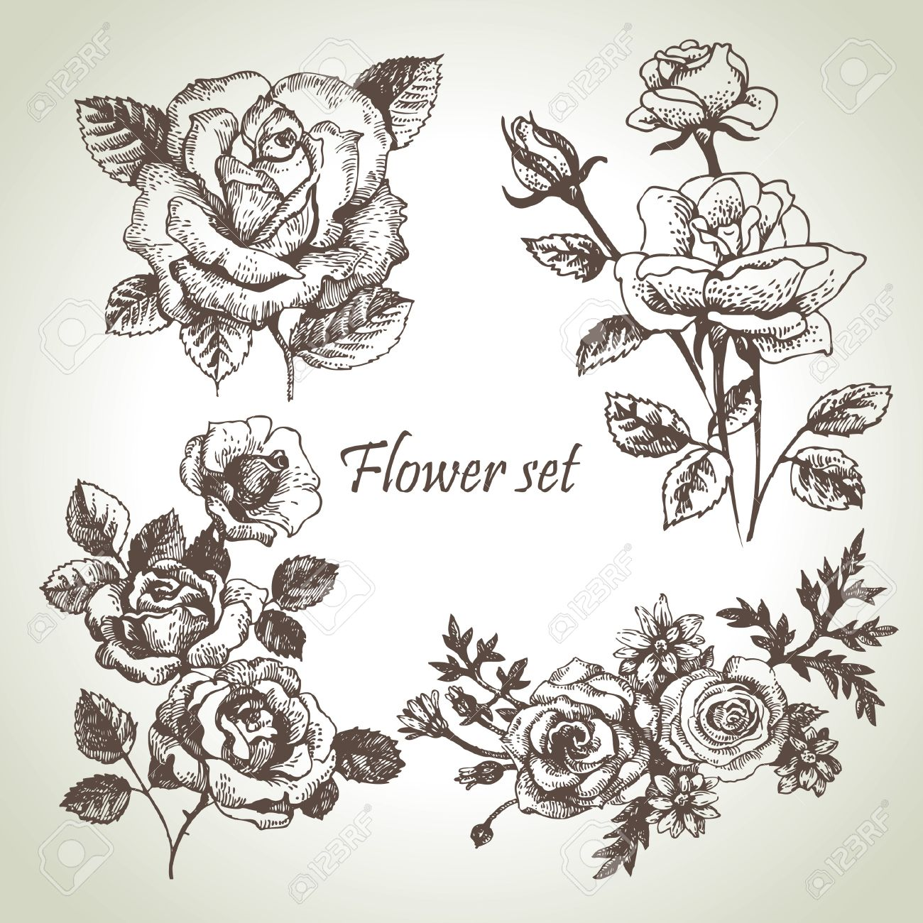 Floral set  Hand drawn illustrations of roses Stock Vector - 16790052