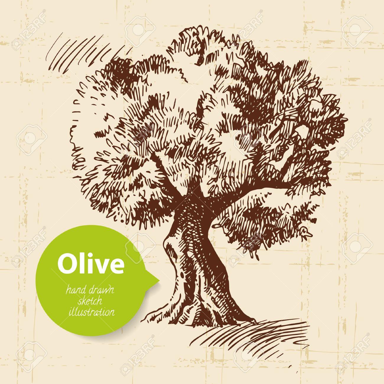 Vintage olive background hand drawn illustration royalty free vector vintage olive background hand drawn illustration thecheapjerseys Gallery