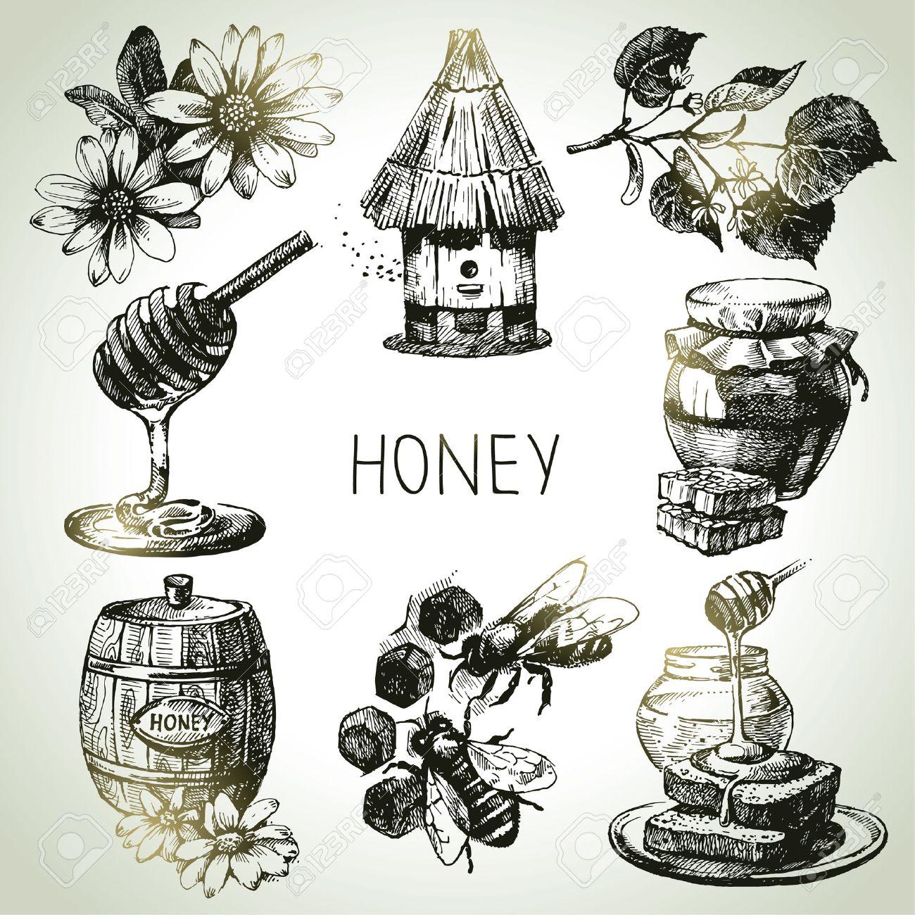 Honey Set. Hand Drawn Vintage Illustrations Royalty Free Cliparts ...