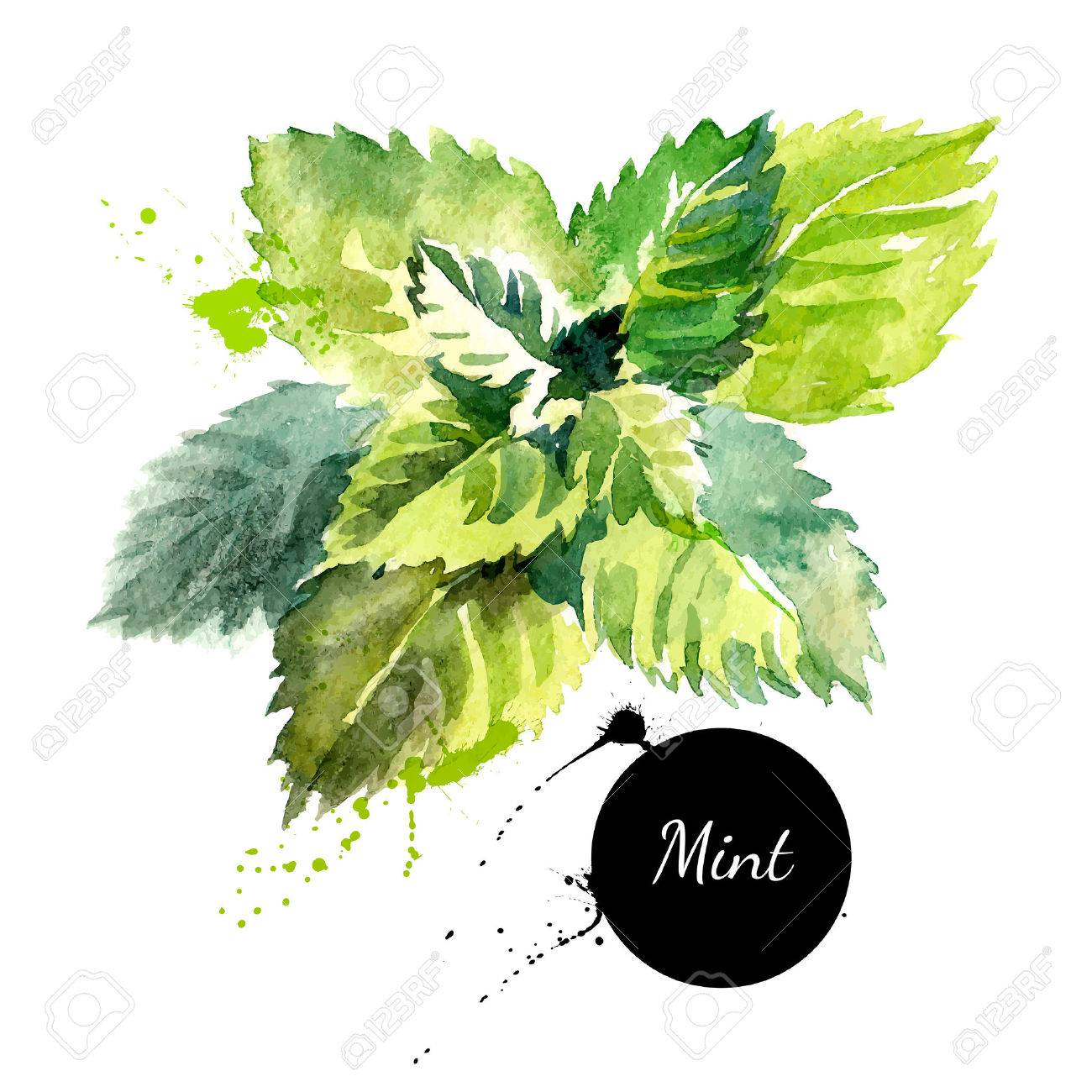 Kitchen herbs and spices banner. Vector illustration. Watercolor mint - 38737056