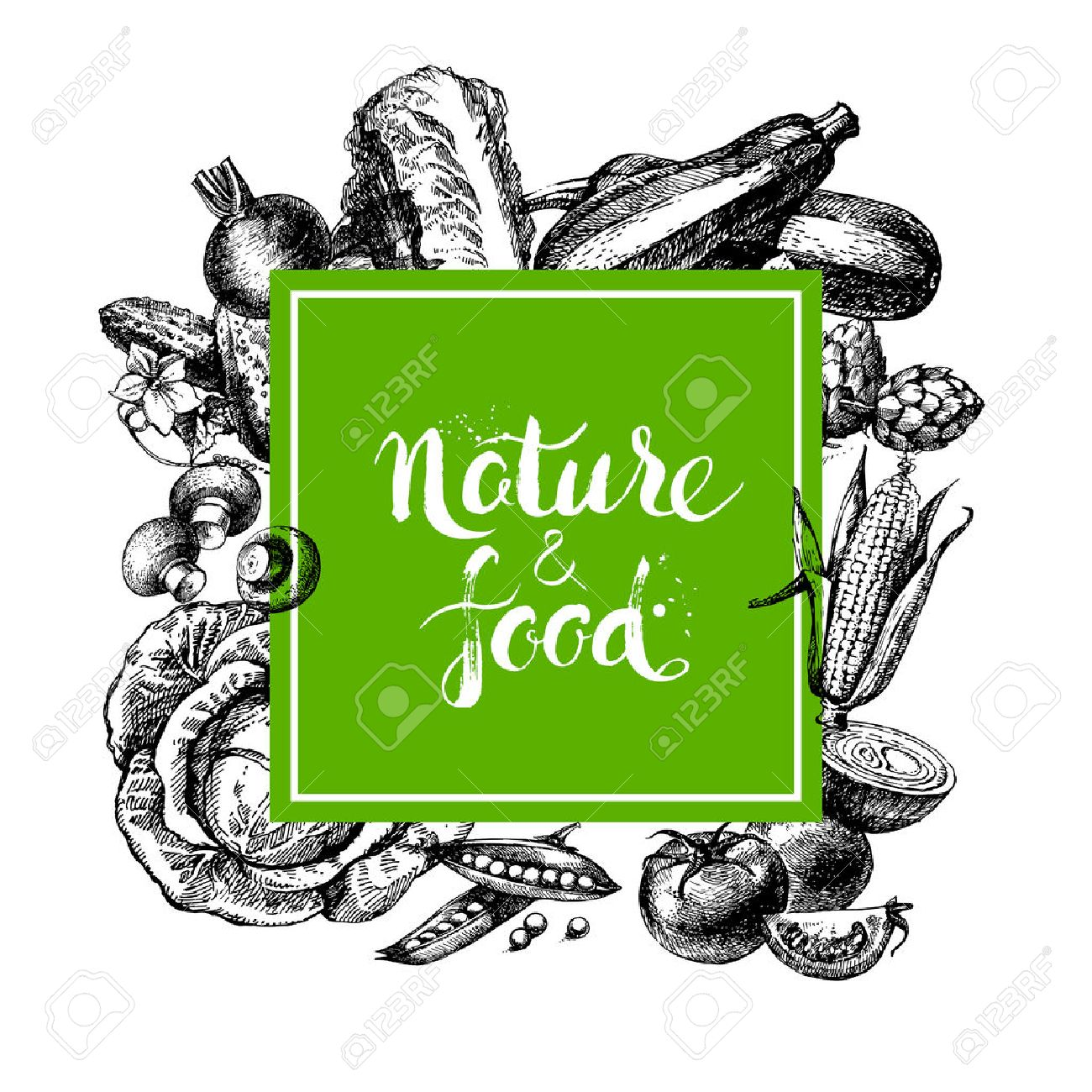Eco natural food menu background. Sketch hand drawn vegetables frame. Vector illustration Stock Vector - 42910676