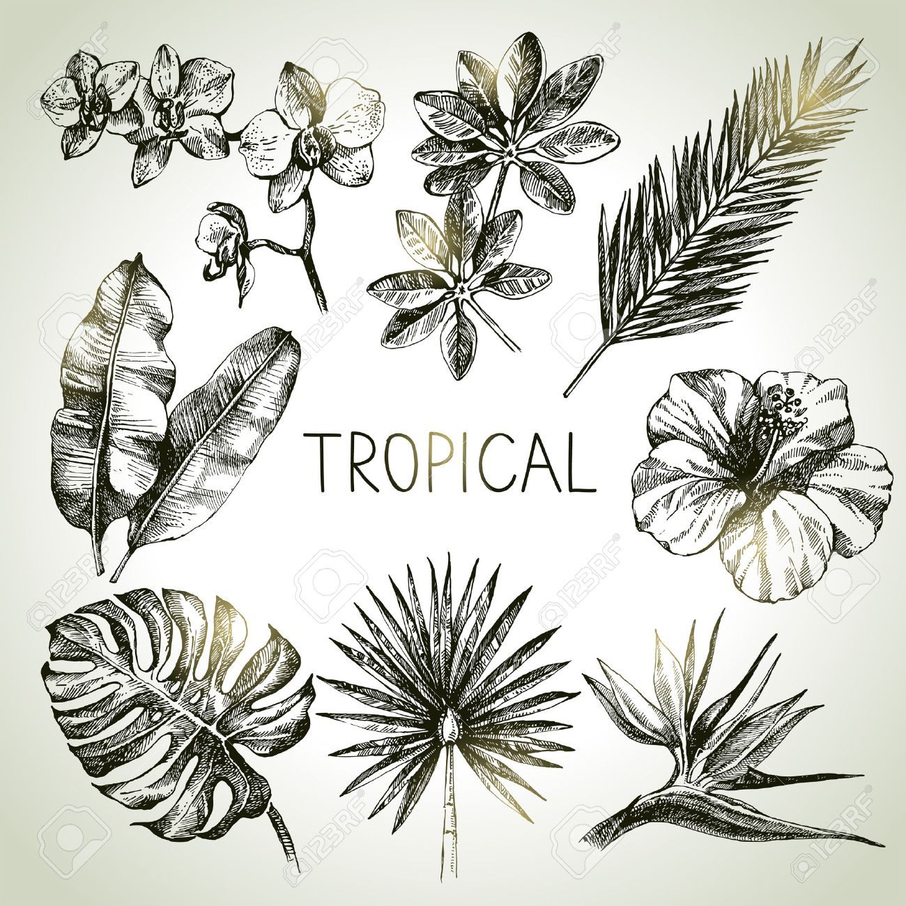 Hand drawn sketch tropical plants set. Vector illustrations Stock Photo - 46604887