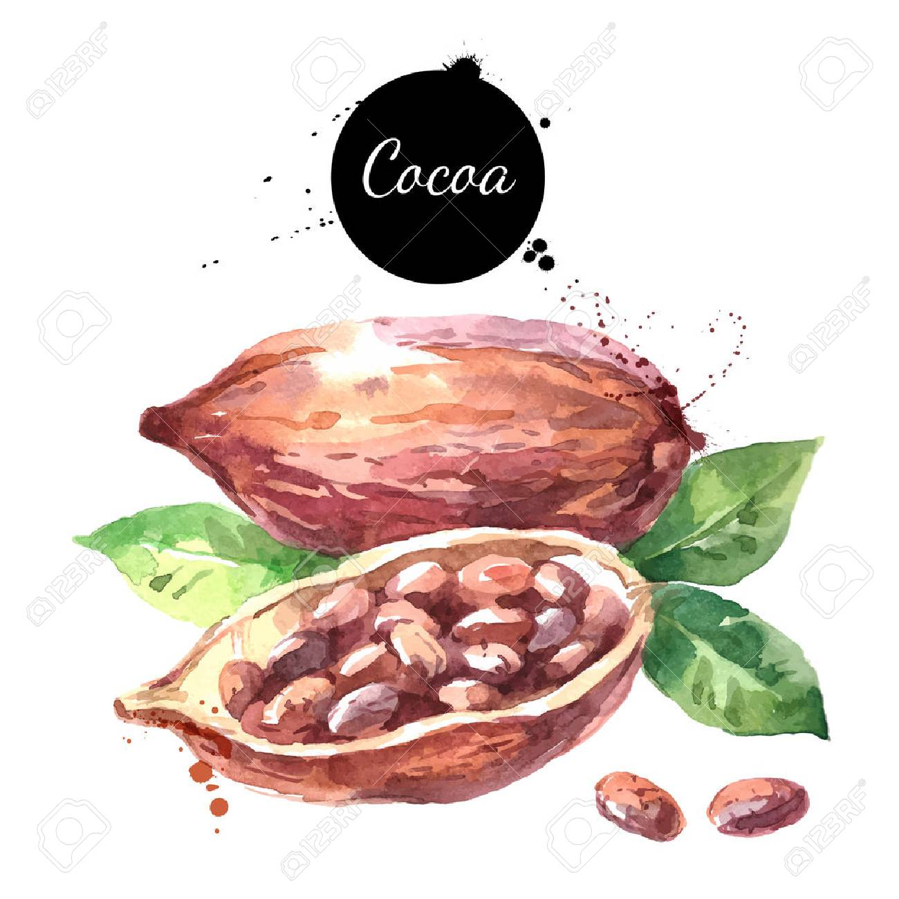 Watercolor hand drawn cocoa pod. Isolated organic natural eco vector illustration on white background - 60554068