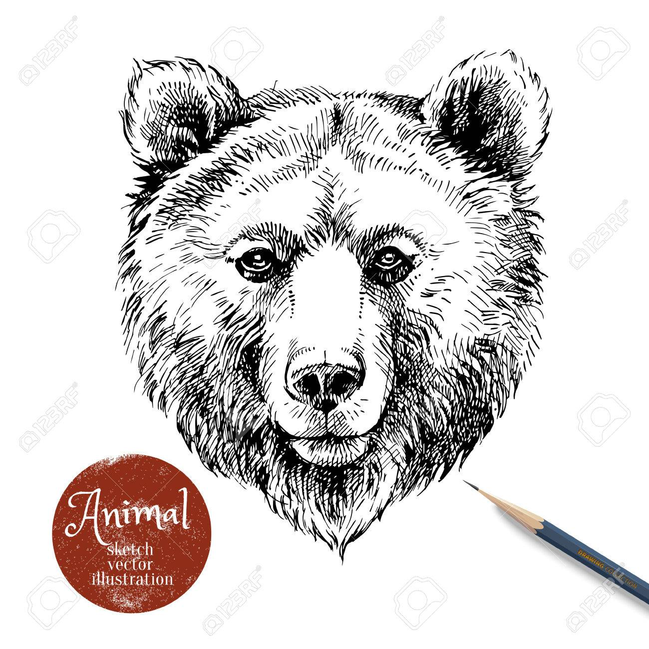Hand drawn brown bear animal vector illustration sketch isolated bear portrait on white background with