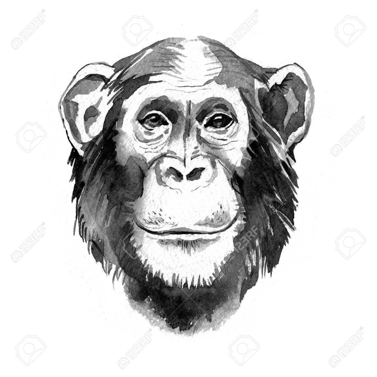 watercolor hand drawn monkey chimpanzee portrait monochrome stock