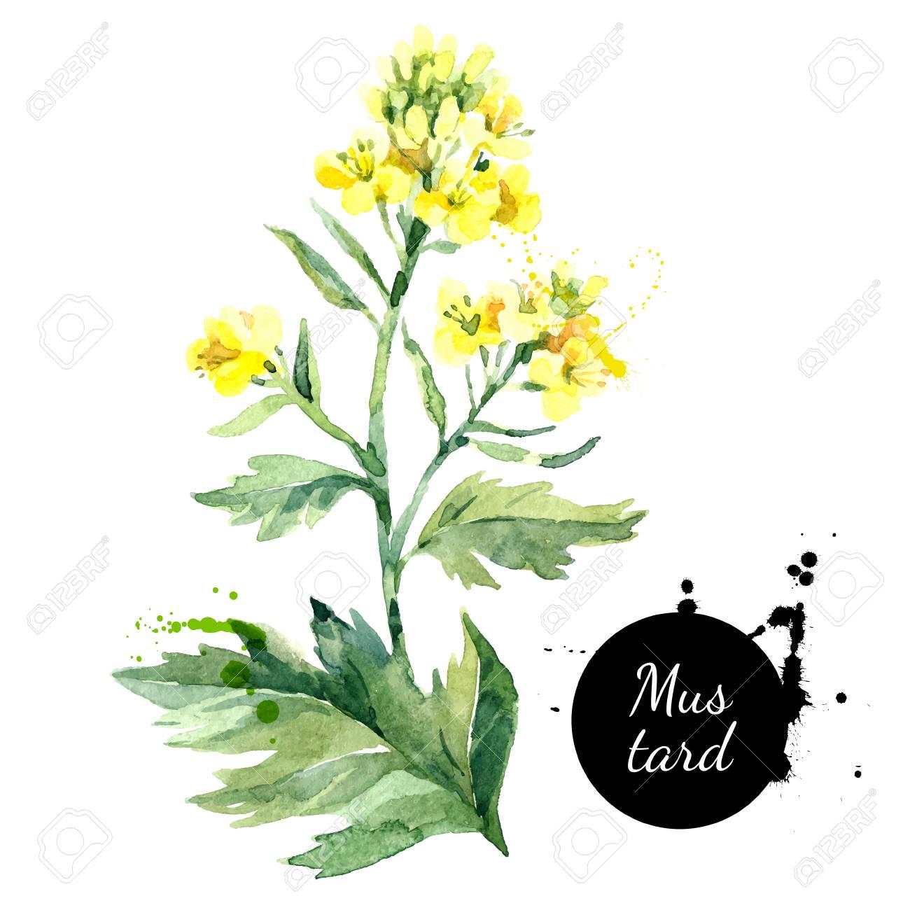 Mustard Flower Background Illustration Stock Illustration - Download Image  Now - iStock