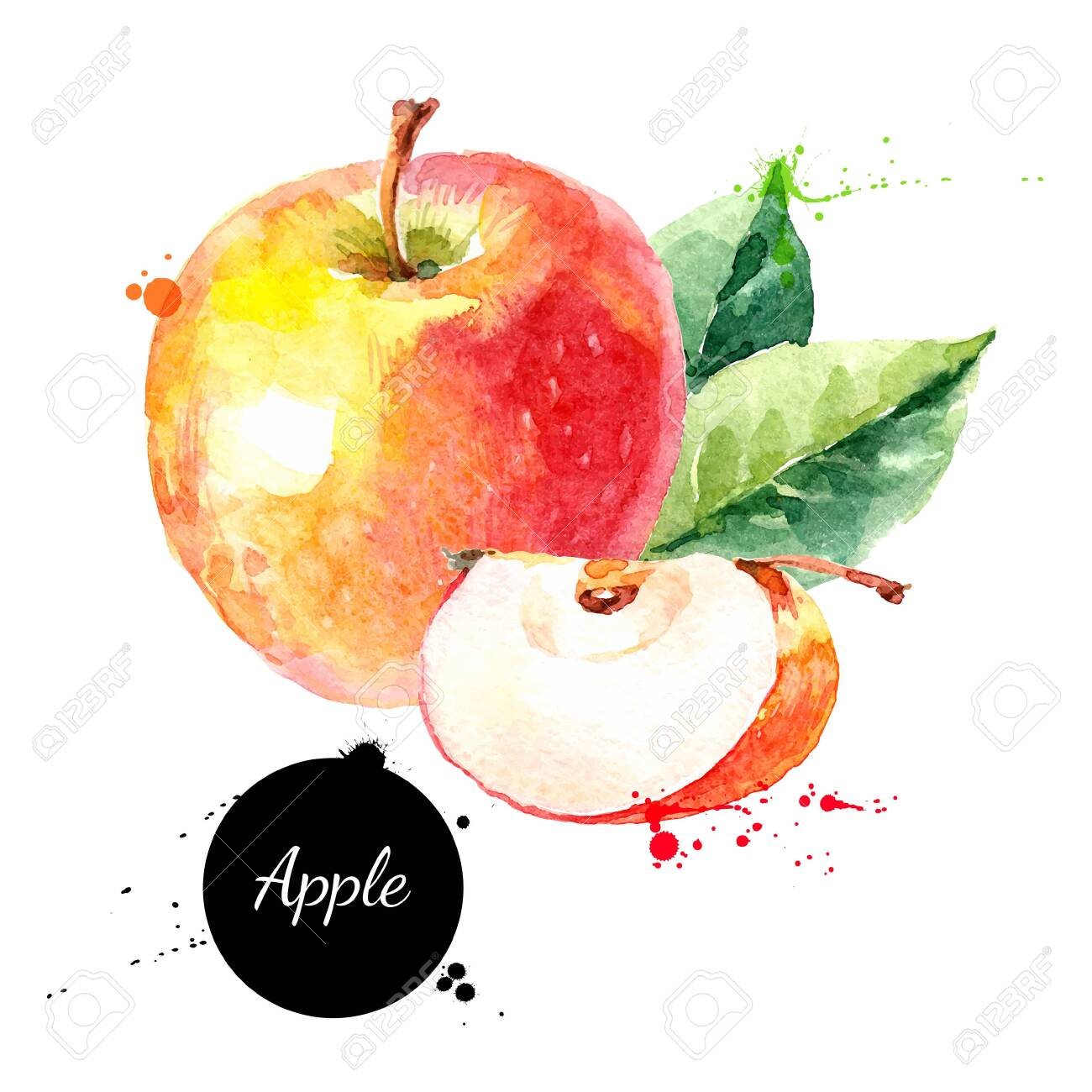 Watercolor hand drawn yellow and red apple. Isolated eco natural food fruit illustration on white background - 150456932