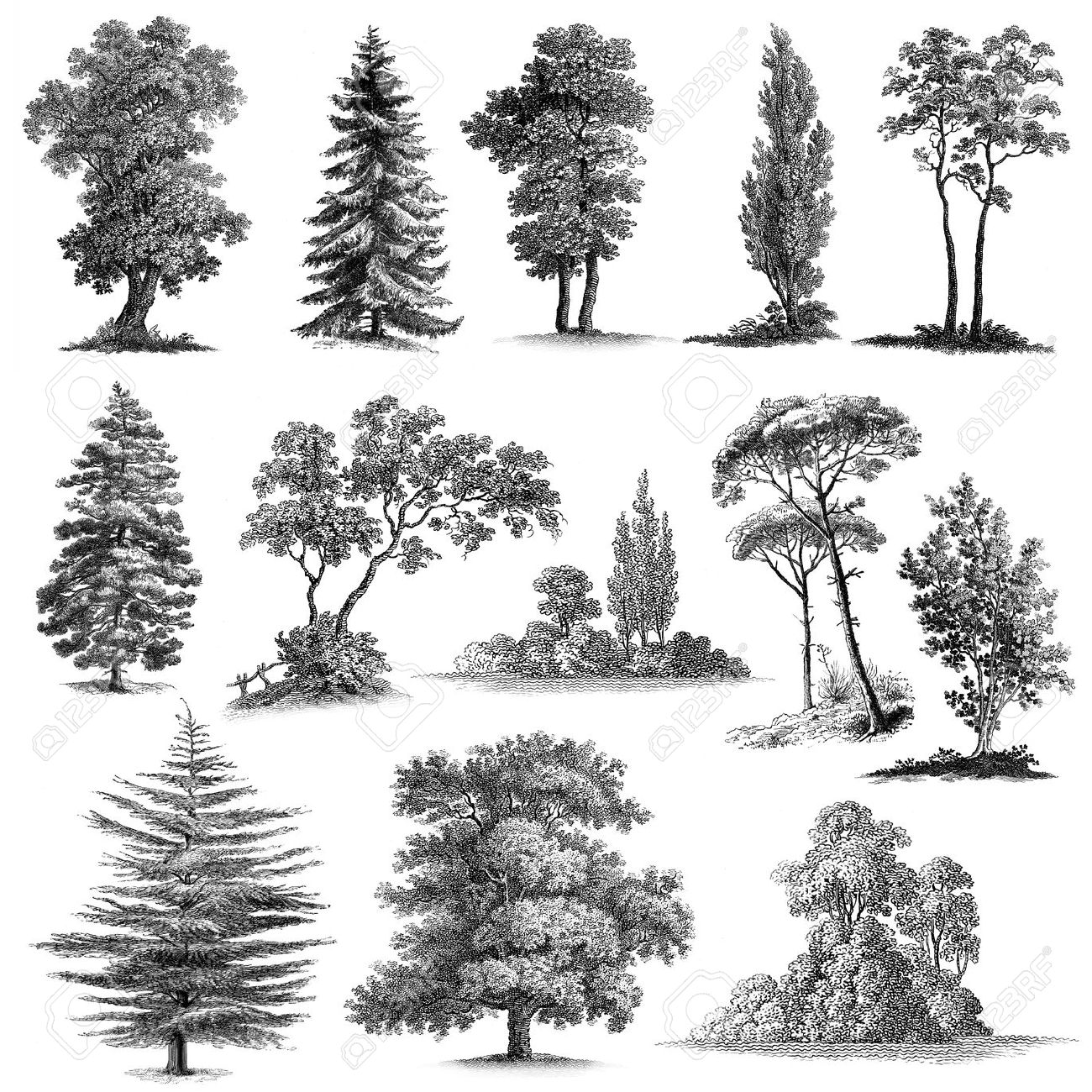 Big set of 13 Vintage engravings reproduced in high quality hand..