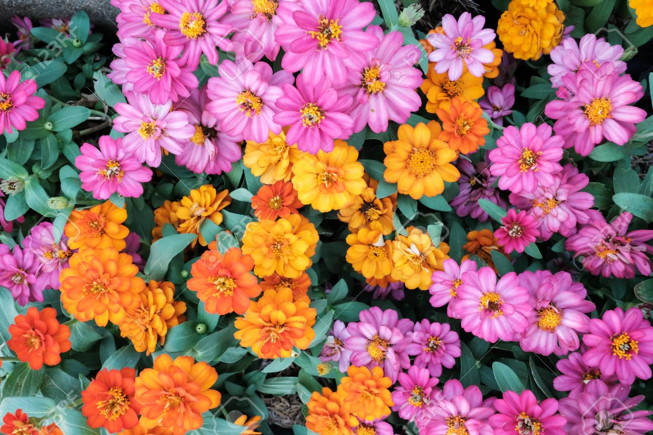Amazing Beautiful Flowers Background Stock Photo Picture And