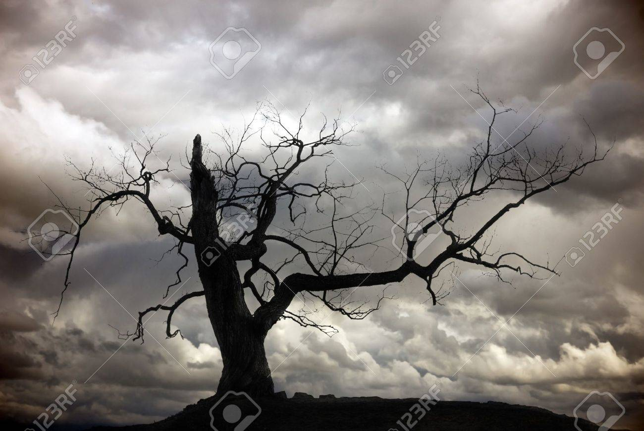 More similar stock images of 3d landscape with fall tree - Dead Tree Silhouette Of Bare Tree With Cloudy Sky Stock Photo