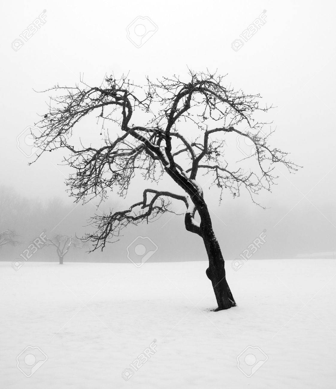Bare tree in a snowstorm Stock Photo - 8310561