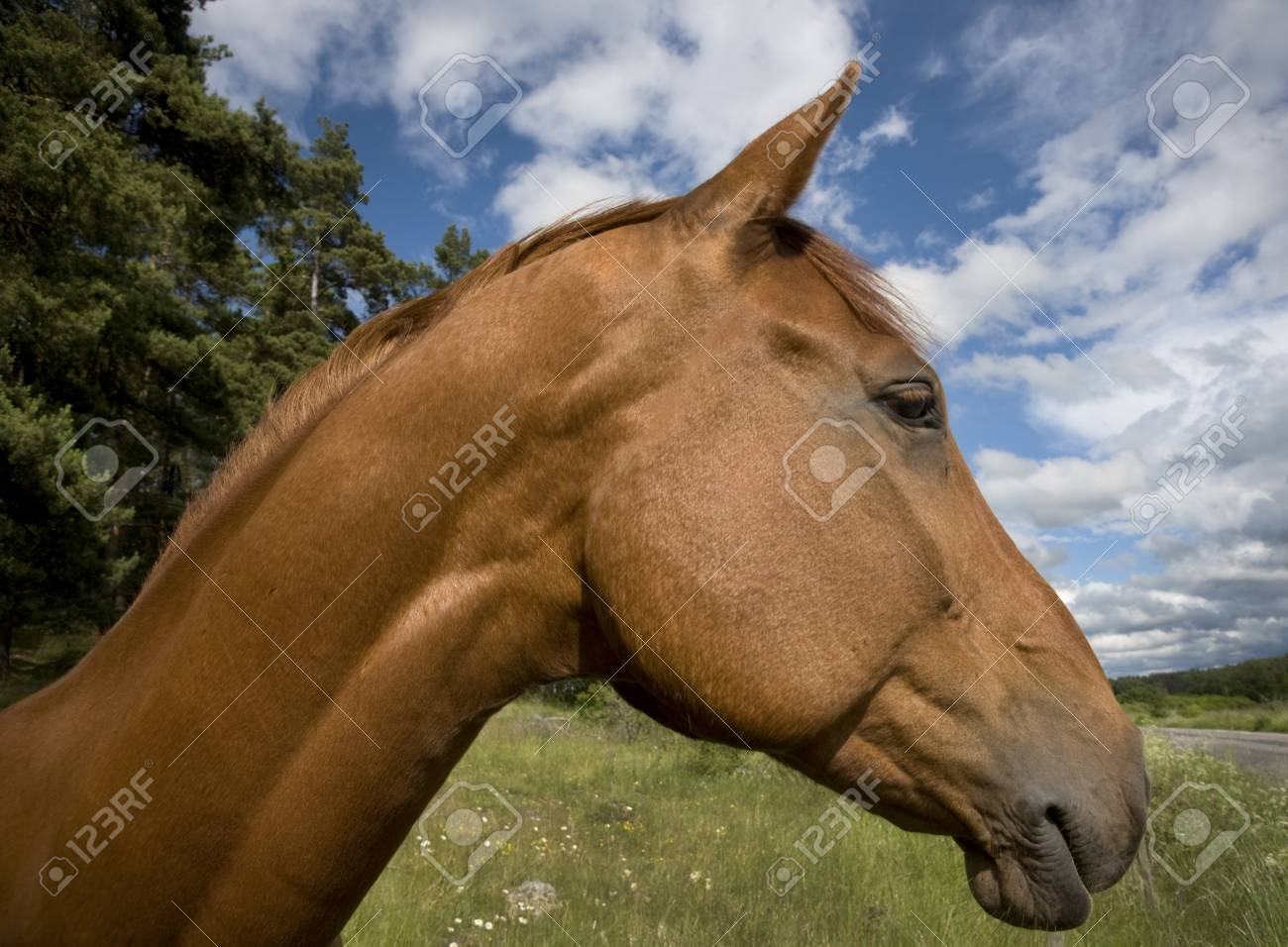 Head of brown horse with blue sky Stock Photo - 8311640