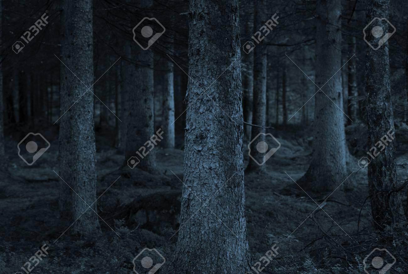 Spooky forest with conifers in shades of blue Stock Photo - 9496067