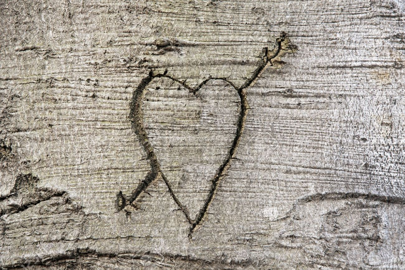 Heart carved in the bark of a tree Stock Photo - 10981087