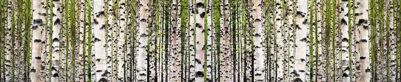 Fruhling wald wallpaper