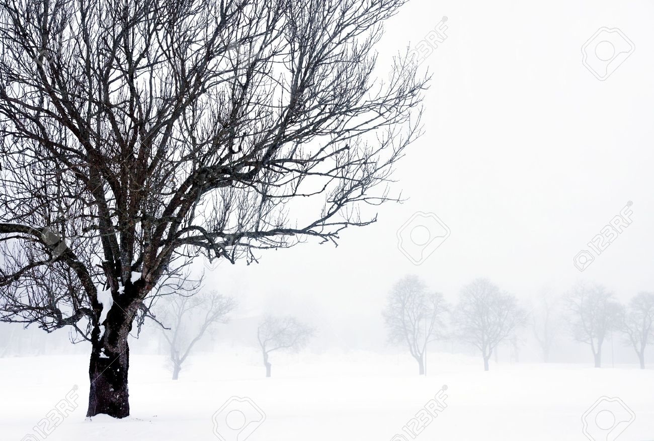 foggy winter landscape with bare tree in foreground Stock Photo - 14250750