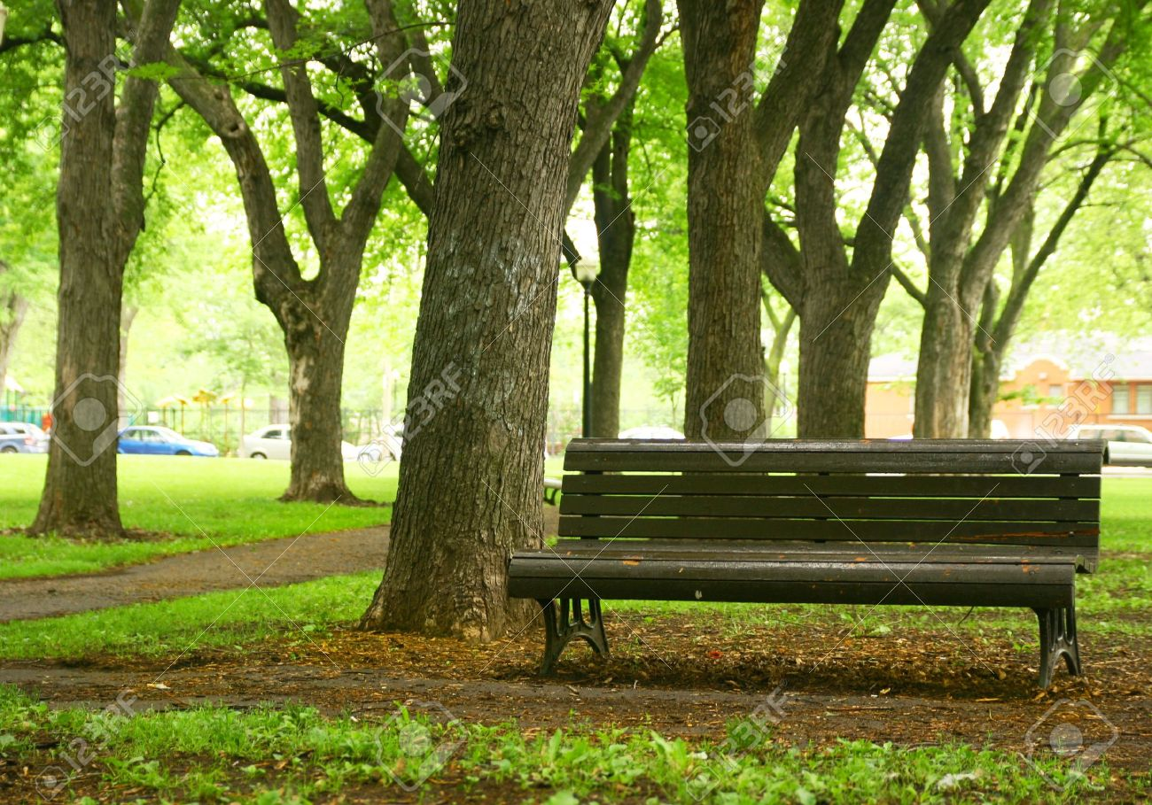 Bench In A Park And Old Trees Stock Photo Picture And Royalty Free